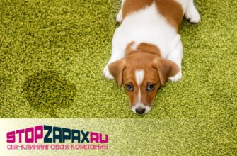 Устранение любых неприятных запахов после кошек и собак в СПБ_stopzapax.ru