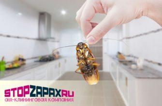 Устранение вредных веществ после травли насекомых в СПБ_stopzapax.ru